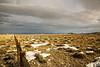 Down a Fence Line (wyojones) Tags: wyoming clark chapmanbench badlands sagebrush fence fenceline clouds cloudscape snow winter