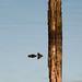 Lhafp (Silaris Inc.) Tags: wasser spiegelung sonnenlicht holz pfahl marl nordrheinwestfalen deutschland de