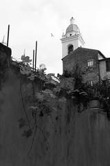 Liguria (fabiolug) Tags: wall plant church architecture noli liguria ligury italia italy leicammonochrom mmonochrom monochrom leicamonochrom leica leicam rangefinder blackandwhite blackwhite bw monochrome biancoenero 35mmsummicronasph 35mmf2summicronasph summicronm35mmf2asph summicron35mmf2asph 35mm summicron leicasummicron leica35mm bird