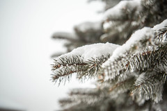 sunday-3099 (FarFlungTravels) Tags: winter ski skiing laurelhighlands pennsylvania reservoir morning sunrise foggy snow squall