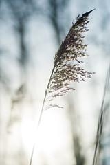 Simplicity @ Botshol (PaulHoo) Tags: holland netherlands nature landscape winter 2017 botshol nikon d700 macro detail closeup sun light backlit hay abstract