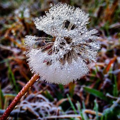 Frost (abhishekskumar) Tags: frost ice water winter munnar crystal