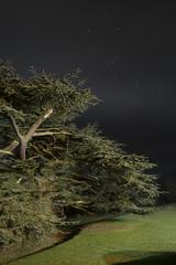 Dumbleton Hall at night (Rob Clowes) Tags: dumbleton dumbletonhall tree sky night dark longexposure fuji fujifilm 18mm mist stars landscape tripod winter torchlight xpro1