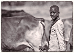 Young Maasai tending cattle on escarpment overlooking Maasai Mara (stevebfotos) Tags: masimara maasaimara kenya bw africa cattle topaz narokcounty ke