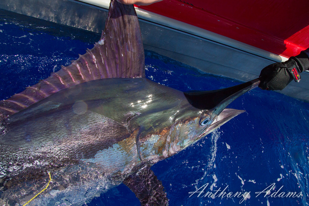 Bagni Blue Marlin Levanto : The world s newest photos of bluemarlin flickr hive mind