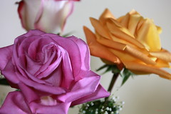 Cut roses_2017 (Zygmunt Su...) Tags: cutroses purple yellow roses flowercomposition saveearth fantasticflower flowersmacroworld
