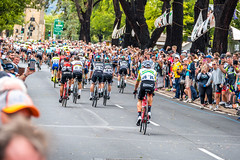 The Riders Depart (Serendigity) Tags: tdu tourdownunder 2017 norwood australia race sa southaustralia adelaide stage4 cycling event