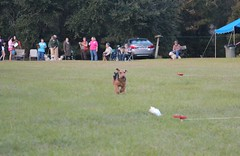 Lure coursing (wendy4warnock) Tags: mctavish