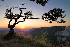 Lonely Tree against Sunrise - Creux-du-Van - Neuchâtel - Switzerland (Rogg4n) Tags: morning flowers light summer sky panorama orange sun moon mist mountain lake tree nature colors grass silhouette rock clouds sunrise landscape dawn switzerland spring warm europe suisse circus july wideangle canyon hills jura vegetation rays paysage neuchâtel roche 2015 valdetravers creuxduvan lacdebienne 13mm goldenhours cretes ilesaintpierre soliat canoneos100d efs1018mmf4556isstm