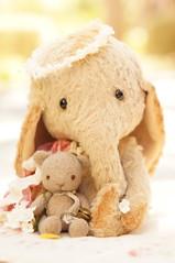 Poppy n Little Bear (little ︎♥ lovelies) Tags: bear elephant cute floral animals scarf vintage miniatures stuffed doll teddy little handmade lace breath adorable plush tiny handcrafted crown dried babys stardust elly headband dollhouse gypsophila mrbear mariongubbens