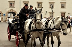 DSC_0857 (m.genca) Tags: vienna austria europe europa winter city citta d7000 nikon marcogenca genca photo marco animal cavallo cavalli
