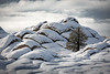 Snowy White Pocket (David Swindler (ActionPhotoTours.com)) Tags: tree lonetree cold arizona whitepocket winter vermillioncliffs snow