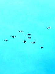 Bird shapes. (dagboshoots) Tags: saturated sky photography photo blue iphone travel london flying bird birdflying