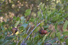 Ψίνθος (Psinthos.Net) Tags: ψίνθοσ psinthos winter january ιανουάριοσ γενάρησ χειμώνασ φύση εξοχή countryside nature afternoon απόγευμα απόγευμαχειμώνα χειμωνιάτικοαπόγευμα acorns oak βελανίδια βελανιδιά θάμνοσ shrub αγκάθεσ thorns leaves φύλλα winterleaves φύλλαχειμώνα χειμωνιάτικαφύλλα κλαδιά branches light shadow φώσ σκιά φώσήλιου φώσηλίου sunlight valley psinthosvalley κοιλάδα κοιλάδαψίνθου κοιλάδαψίνθοσ φασούλι φασούλιψίνθοσ φασούλιψίνθου κοιλάδαφασούλι fasuli fasouli fasoulivalley fasoulipsinthos fasoulipsinthou seeds σπόροι καρποί μέρα day