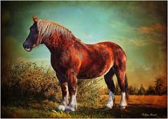 Postier Breton (Philippe Hernot) Tags: postierbreton cheval guiscriff 56 morbihan bretagne france kodachrome philippehernot cornouaille nikond700 nikon posttraitement