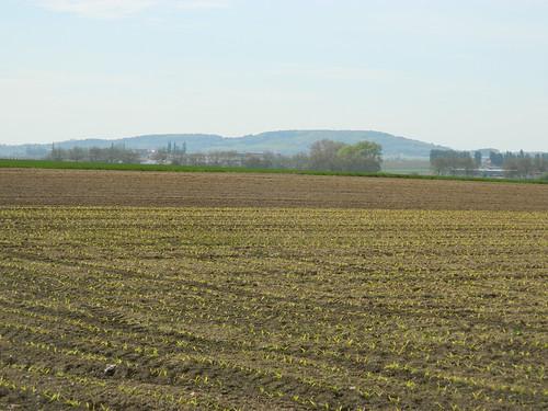 Warneton: View of the Kemmelberg (Hainaut)