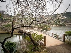 P3010188.jpg (Dennis Watts1) Tags: japan worldcruise2014 garyubai plumblossom yokohama bridge sankeiengarden chineseplum