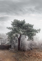 Nice tree along the road (RobertFenyo) Tags: tree trees winter seasons atmosphere leaves