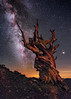 The Patriarch (Wayne Pinkston) Tags: ancient bristlecone pine ancientbristleconepine ancientbristleconepineforest california whitemountains schulmangrove night sky nightsky nightphotography nightlandscape nightscape waynepinkston lightcrafter wwwlightcraftercom wwwwaynepinkstonphotocom stars starscape starrynight milkyway galaxy cosmos theheavens astrophotography landscapeastrophotography widefieldastrophotography longexposure
