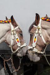 Wemmel : Jaarmarkt, championship for horses#3 (foto_morgana) Tags: animals belgie belgique belgium cheval horse jaarmarkt2016 mammalia mammals mammifères outdoor paard säugetiere wemmel zoogdieren
