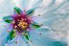 Flor-del-almendro (Lucas Gutiérrez) Tags: flor almendro macrofotografía motril costatropicaldegranada lucasgutierrezjimenez