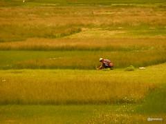20170119 (josejuanmiranzo) Tags: agriculturaartesanal artisanalagriculture agricultura cereales cereals cuzco peru paisaje landscape foto fotografia photo photography canonista canon canonist 365 365project jjmiranzo