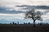 Solitude (Infomastern) Tags: söderslätt cloud countryside landsbygd landscape landskap sky tree träd exif:model=canoneos760d exif:aperture=ƒ90 geocountry camera:make=canon exif:isospeed=100 camera:model=canoneos760d geostate geolocation exif:lens=efs18200mmf3556is geocity exif:focallength=80mm exif:make=canon