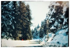 Alpine (PattyK.) Tags: anilio ioannina giannena prefectureofioannina epirus ipiros greece grecia griechenland hellas ellada europe europeanunion nature cold snow winter winterlandscape snapseed february 2017 nikond3100 trees alpine alpinegreece ανήλιο νομόσιωαννίνων ιωάννινα ήπειροσ φύση χειμώνασ φεβρουάριοσ δέντρα χιόνι κρύο ορεινήελλάδα