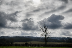Alone... (artheole62) Tags: nikon d5300 nature france hdr hdri sky clouds green trees forest