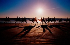 Camels of Cable (nicointhebus (nicolas monnot)) Tags: travel 2002 sunset travelling beach animal landscape australia tourist camel western broome cablebeach nicointhebus bluelist