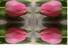 Playing with tulips (Truus) Tags: playing holland tulip tulp truus