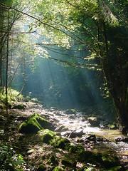 Morgenstimmung (boris_gass) Tags: wasser nebel natur bach wald morgen stimmung dunst waelder morgenstimmung gewaesser baeche