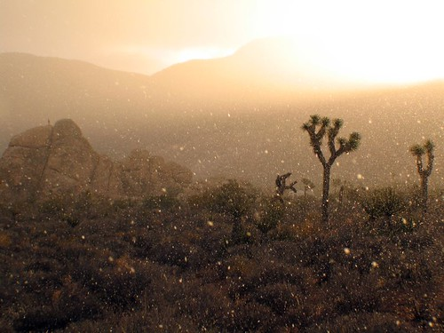 Joshua Tree Snowfall