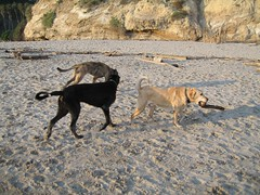 IMG_0333 (wra716) Tags: dog roark