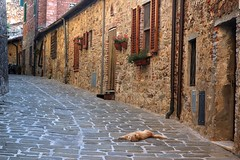 A Cat's Life in a Tuscan Village (Gary Cattell) Tags: italy cat tuscany toscana interestingness6 77points garysplaceutatafeature cotcmostfavorites