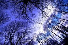 My life (Gianni Dominici) Tags: trees winter italy rome roma topf25 topv111 canon 350d italia topv222 ariccia montegentile 4elementiaria 4giannid 4egiannid 4earia
