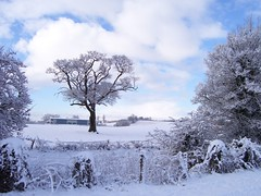 Loner (freebird4) Tags: winter snow tree mrjackfrost rural top20winter shropshire kodak zoomzoom specnature