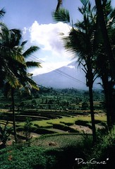 72 Bali - Risaie e campi intorno a Iseh vulcano Gunung Agung (*DaniGanz*) Tags: trees bali verde green alberi palms indonesia volcano ricefield palme vulcano campi risaie gunungagung iseh daniganz