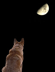 In the Light of the Silvery Moon (dee_r) Tags: dog pet pets moon dogs photoshop wow fantastic loveit card junior abigfave