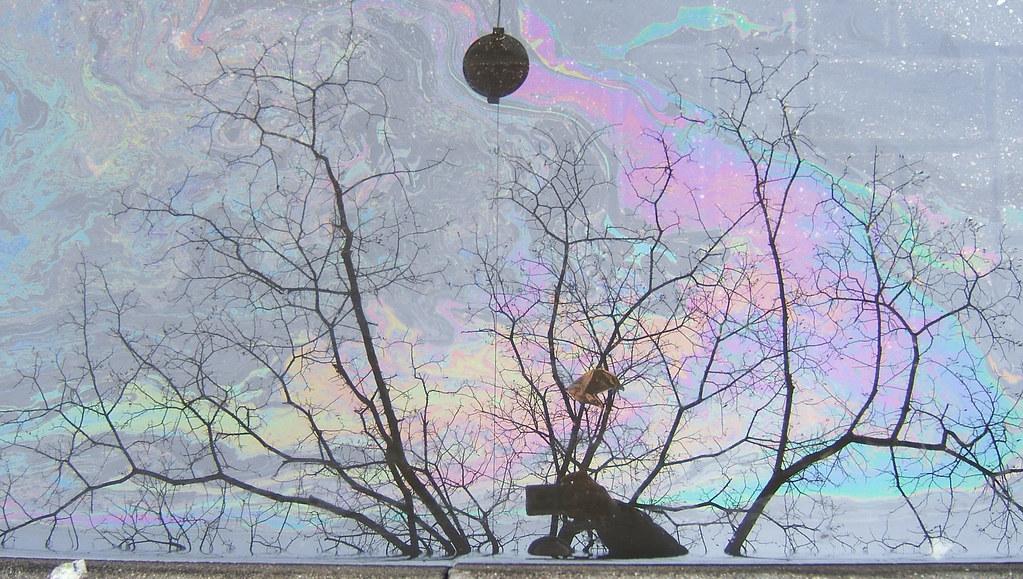 oil slick reflection