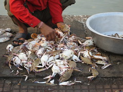 Ferry Wharf 059 (Sanjay Shetty) Tags: ferry crab wharf sorting bhaucha dhakka