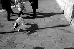 """""""Ombre"""" ...in Laguna (Sergio Vollono) Tags: street people wow strada bn movimento ding venezia animali citt cani mosso dinamismo perstrada sergiovollono lastrada spostamento photostreet wwwartelateraleit wwwsergiovollonophcom sergiovollonogmailcom"""