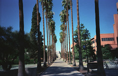 Arizona State's Palm Walk (barleymashers) Tags: arizona college palms university walk palm walkway scanned asu tempe idealic palmwalk arizonastate