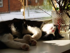 Zzzzz (Dr. Hemmert) Tags: cats pets cute animals indoors