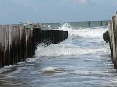 Domburg (Smots) Tags: zee meeuwen domburg