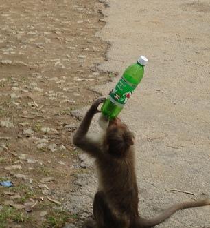 monkey reading ad?