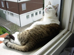 Fusillo sul davanzale (*DaniGanz*) Tags: white silly cute window cat crazy kitten tabby kitty greeneyes ledge windowsill gatto bianco micio occhiverdi cutecatphotos davanzale fusillo catsandwindows biancoetigrato tigrato daniganz