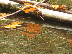 Fall leaves reflected (Mike Bingley) Tags: longexposure autumn canada reflection fall water leaves river leaf maple moody bc britishcolumbia atmosphere 2006 victoria goldstream vancouverisland cotcpersonalfavorite i500 p1f1 exploreoct62006365