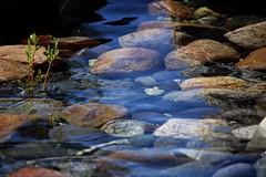 Pensamientos (anitareal) Tags: agua piedras guijarros rio transparente naturaleza colores tonos verde azul libre airelibre bariloche patagonia argentina sur nikon