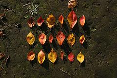 drops arrengement #002 (**sirop) Tags: autumn red orange brown texture leaves yellow drops earth pastel fallen oc arrangement ocda